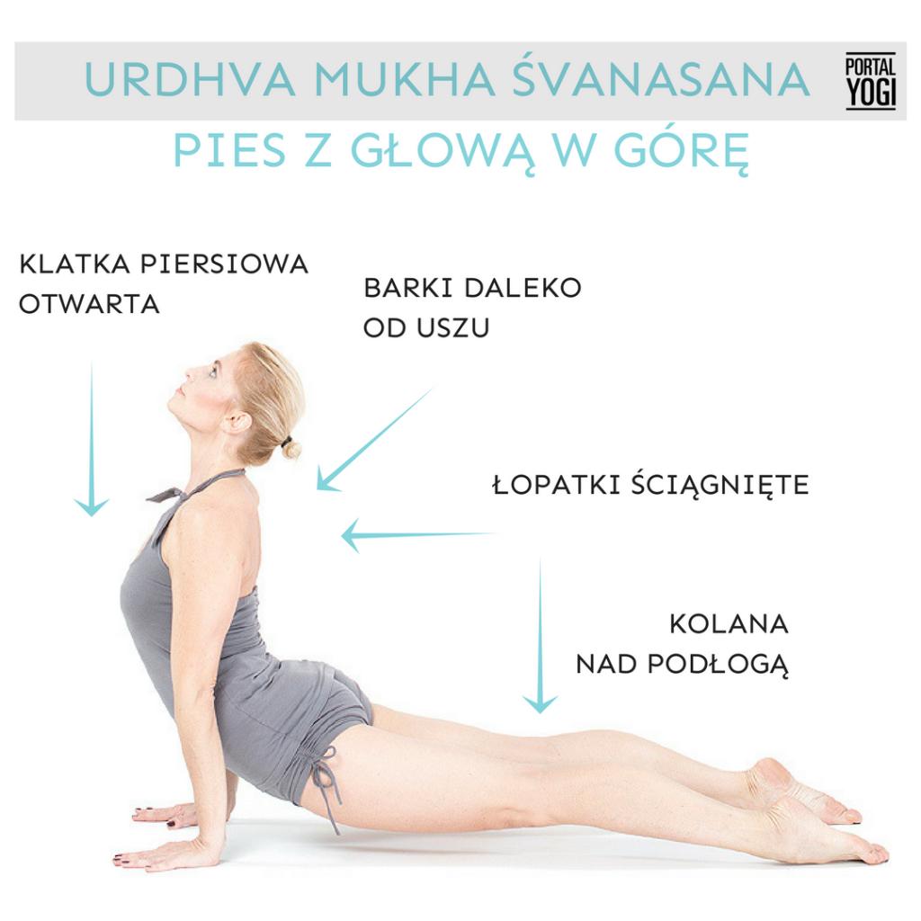 Urdhva mukha śvanasana